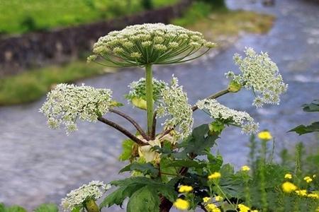 Kwiaty rośliny